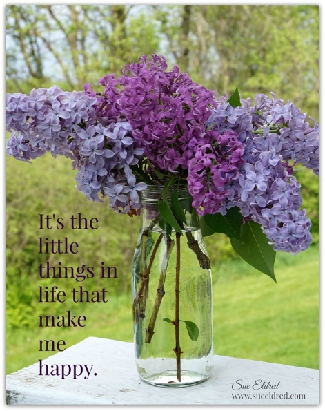 lilacs 4