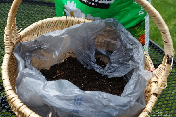 plastic bag and adding potting soil 7244