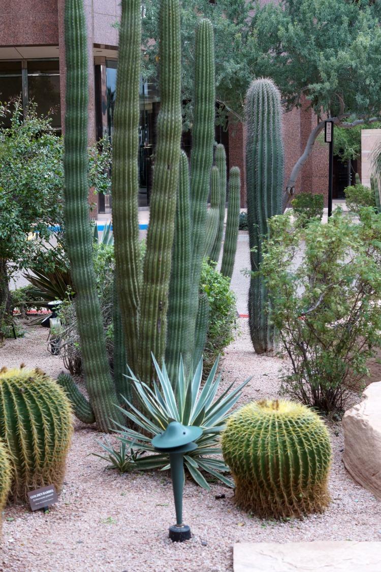 cactus-3984
