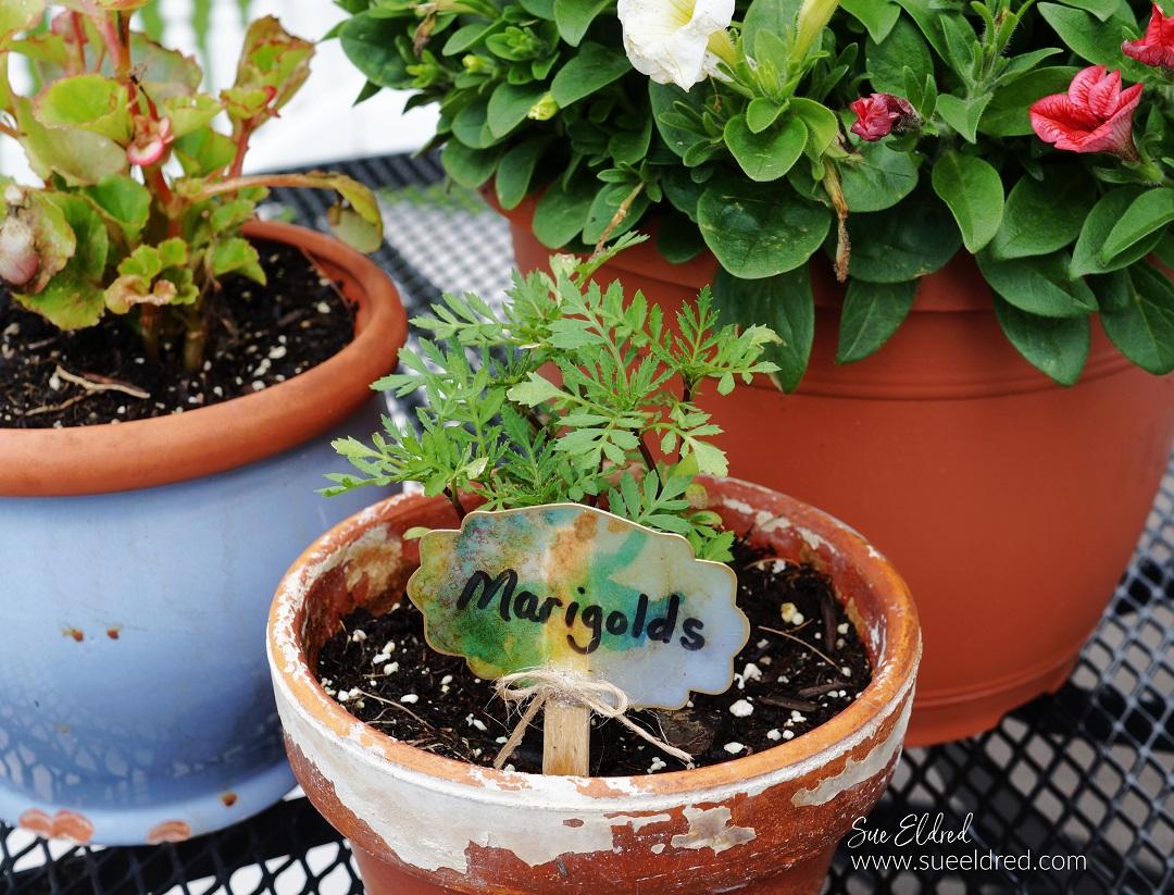 DIY Flower Pot Label-Sue's Creative Workshop www.sueeldred.com 8823